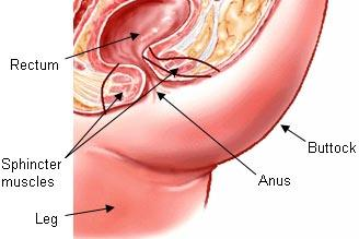 Surgery of the anus